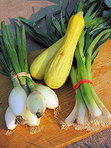 Onions, yellow squash and leeks, harvested July 29, 2008.
